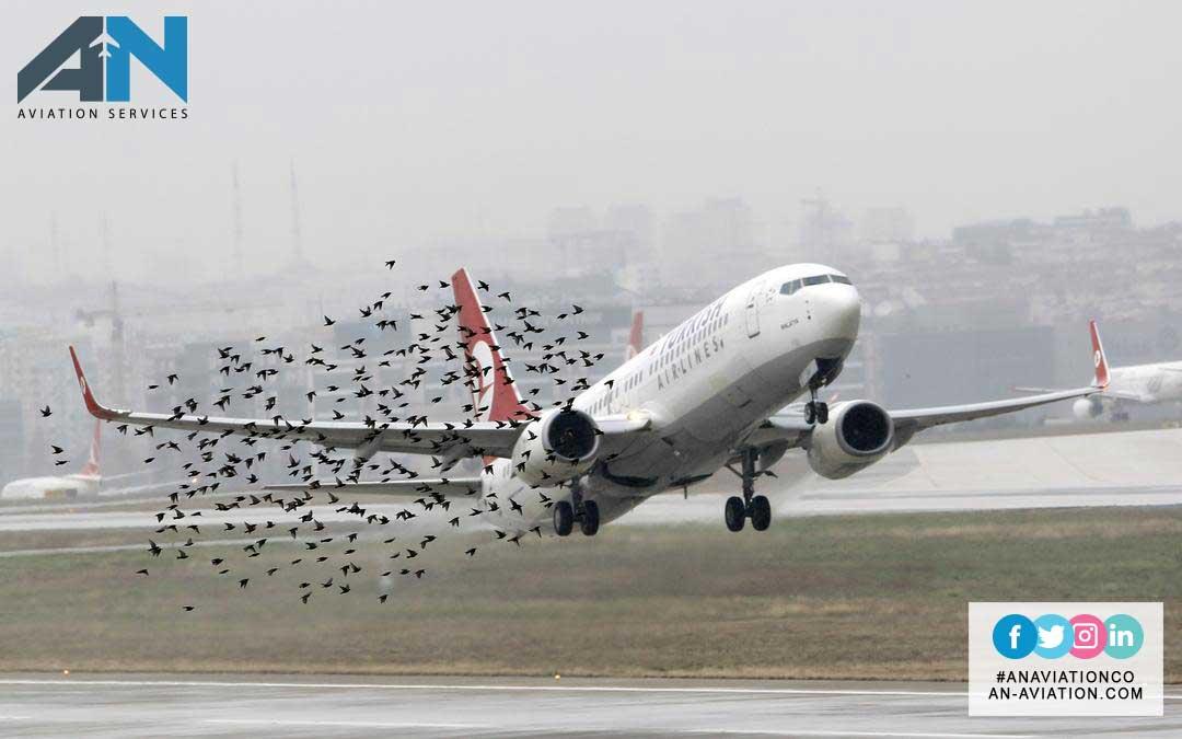 Aircraft Bird strikes: A Growing Hazard