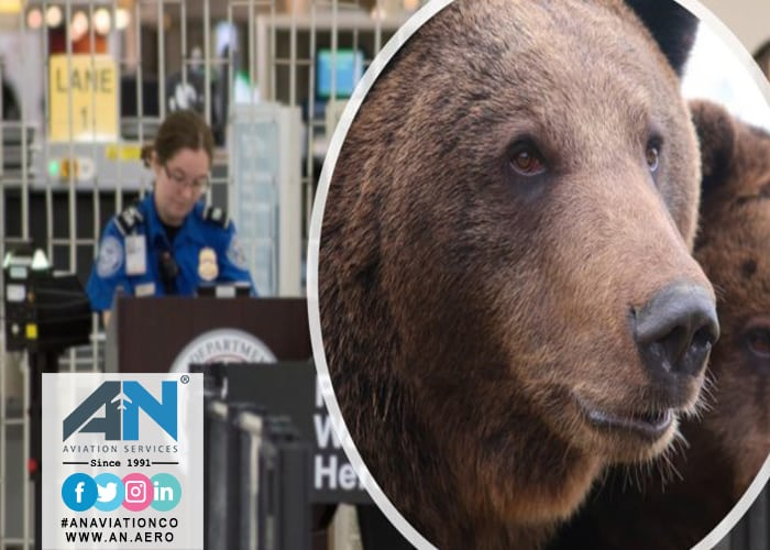 Bear get into an airport
